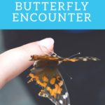 Lukas Nursery Butterfly Encounter pinterest image