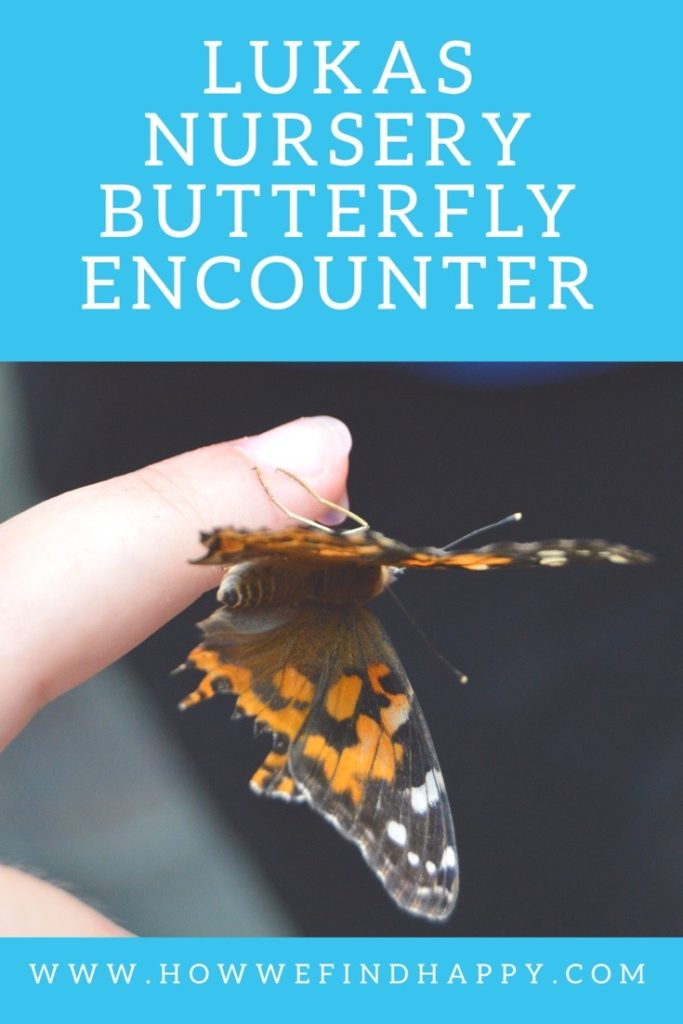 Lukas Nursery Butterfly Encounter