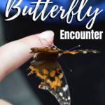 Pinterest graphic for butterfly encounter in central florida