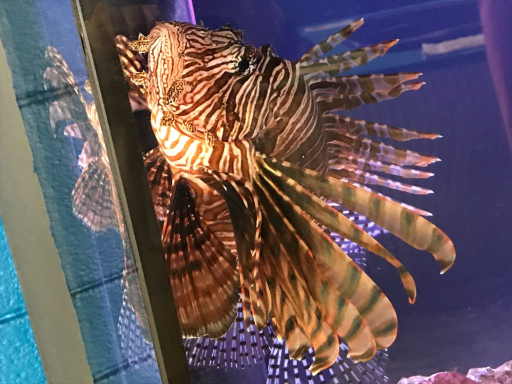 Marine Discovery Center/Disappearing Island Florida