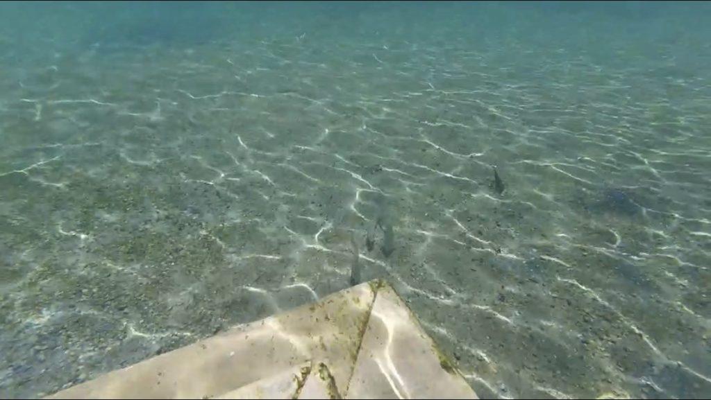 snorkeling underwater view of fish near steps