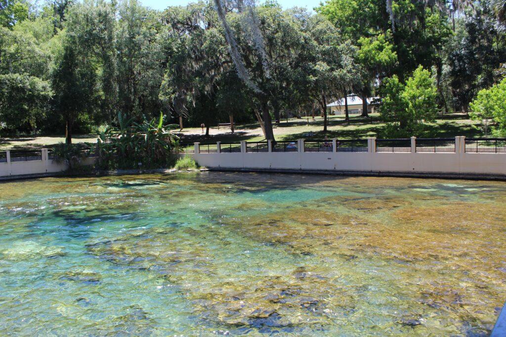 Salt Springs Recreation Area