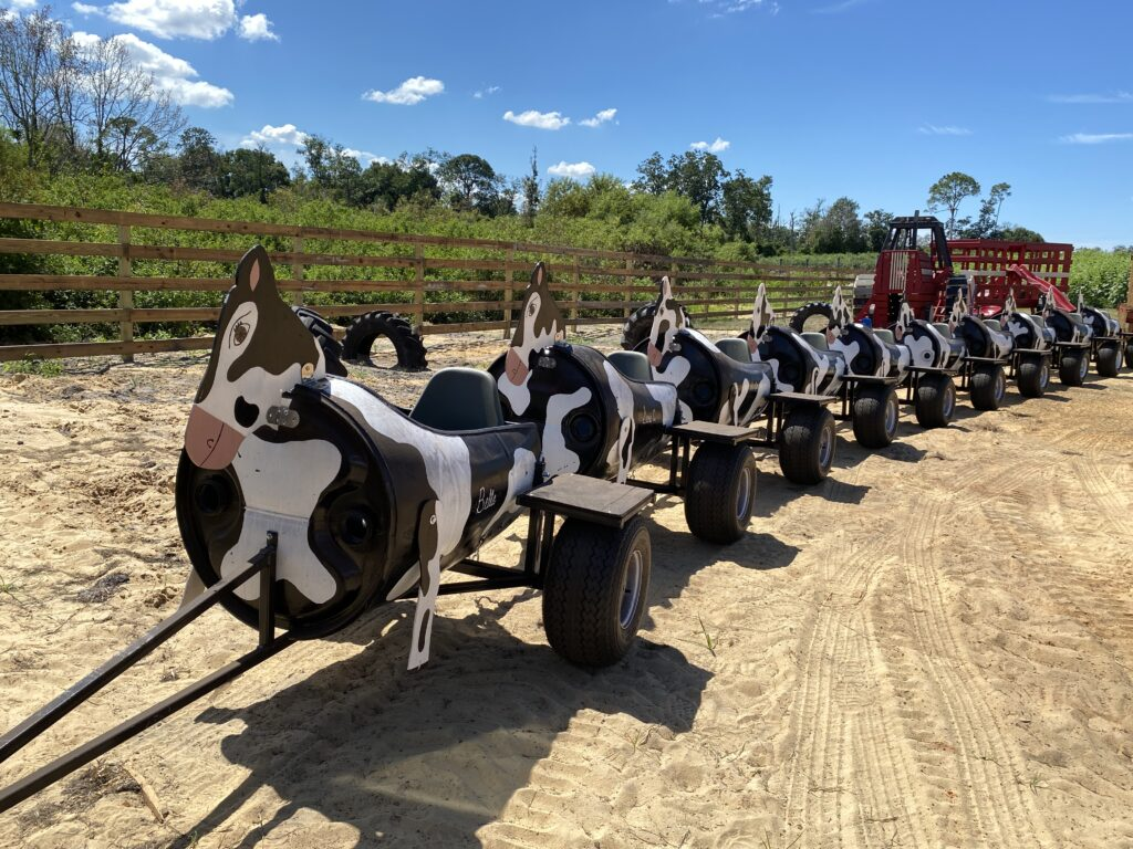 Cow barrel train in lake county florida