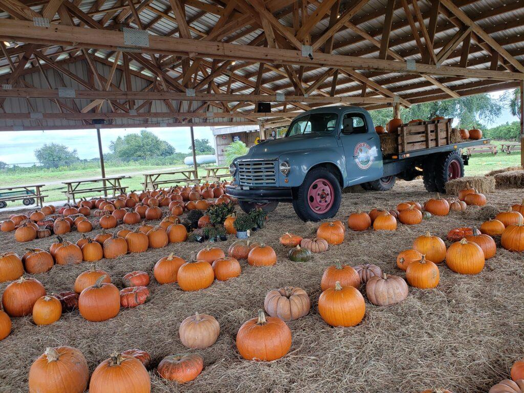 Pumpkin-Ponderosa at Showcase of Citrus