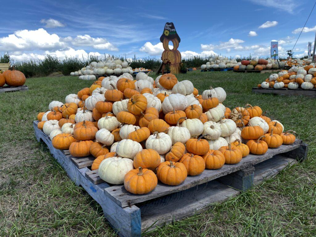 Pumpkins at Atwood Farms family fun around lake county