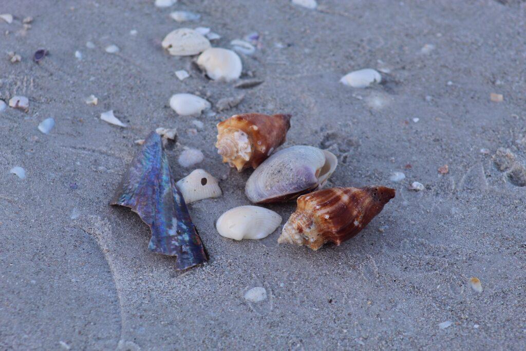 Shells on Sanibel Island