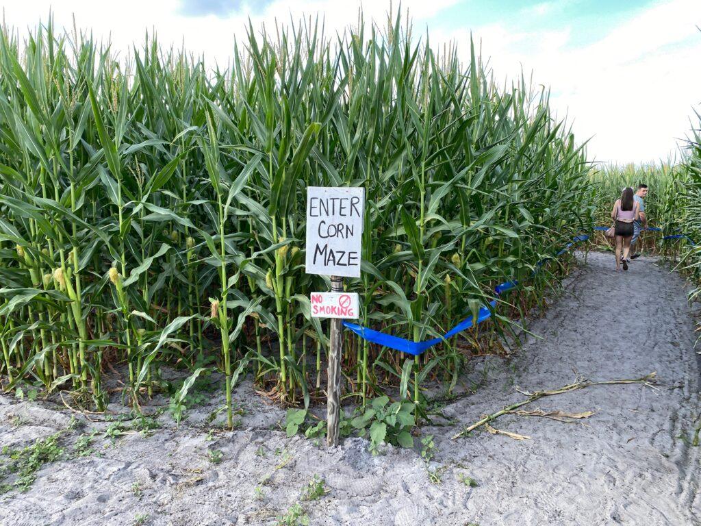 Corn Maze entrance at Long and Scott Farms