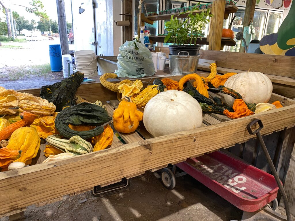 Heirloom pumpkins at Long and Scott Farms