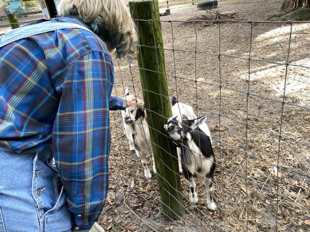 Petting goats at Lil' Bit of Life Farm