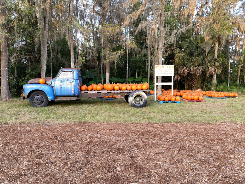 Pumpkin patch at Long and Scott Farms